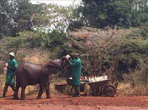 Elefantini allattati dal personale del centro