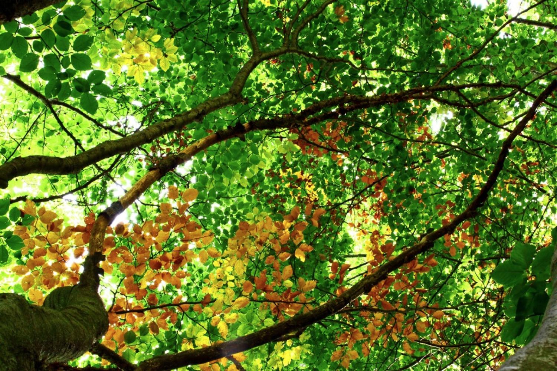 Gli Spazi Verdi Per La Salute Umana Un Potenziale Ancora Poco Conosciuto