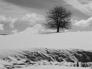 FOTO A - di Daniele Zovi 1