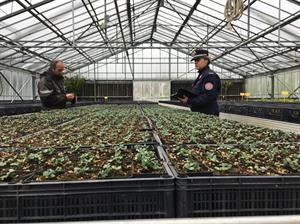 CNCB Pieve S. Stefano: semina in serra di specie forestali