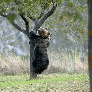 FOTO B - orso marsicano - Sergio Bufalini