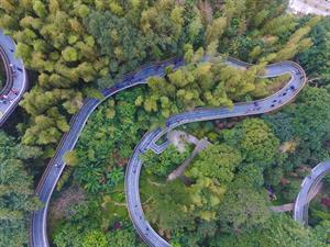Urban forest trail_Fudao skywalk in Fuzhou_China_Photo by Dongming Wang