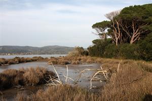 FOTO C Riserva Duna Feniglia