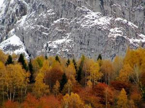 Bosco e montagna