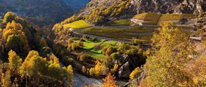 FOTO A - VIgneti delal Valle d_Aosta