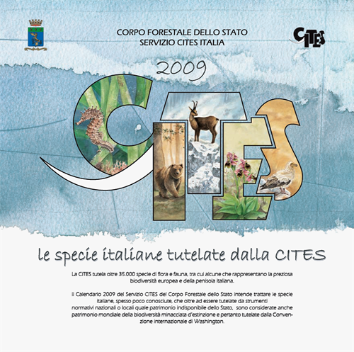 fronte2009-1