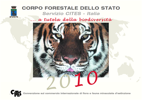 fronte2010-1