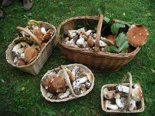 mushrooms-boletus-baskets